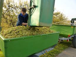 A borászat kellemes tevékenység