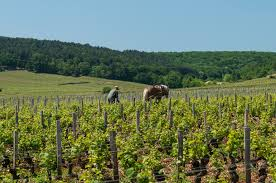 A hagyományos magyar borászat