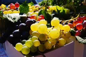 Kiváló magyar borok