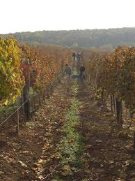 Elismert magyar borok