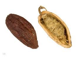 Finomítatlan kakaóvaj